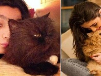 cover - 10 Bollywood Celebrities And Their Adorable Pets.!!