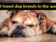 cover - Top 10 Most Loved Dog Breeds In The World.!!