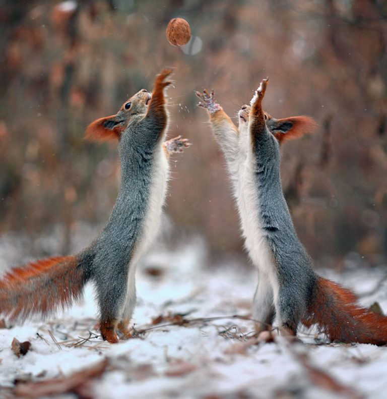 1 - These Pics Of Squirrels Is The Most Adorable Thing You Can See On The Internet.!!