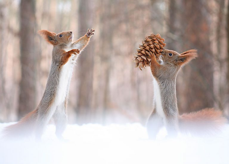 10 - These Pics Of Squirrels Is The Most Adorable Thing You Can See On The Internet.!!