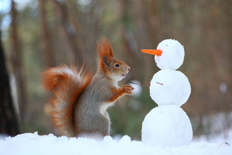 2 - These Pics Of Squirrels Is The Most Adorable Thing You Can See On The Internet.!!