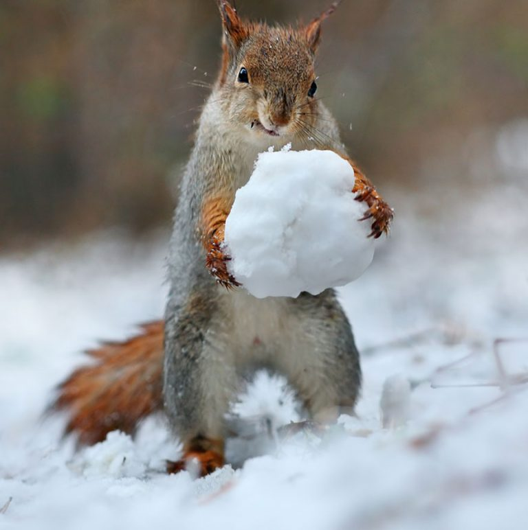3 - These Pics Of Squirrels Is The Most Adorable Thing You Can See On The Internet.!!