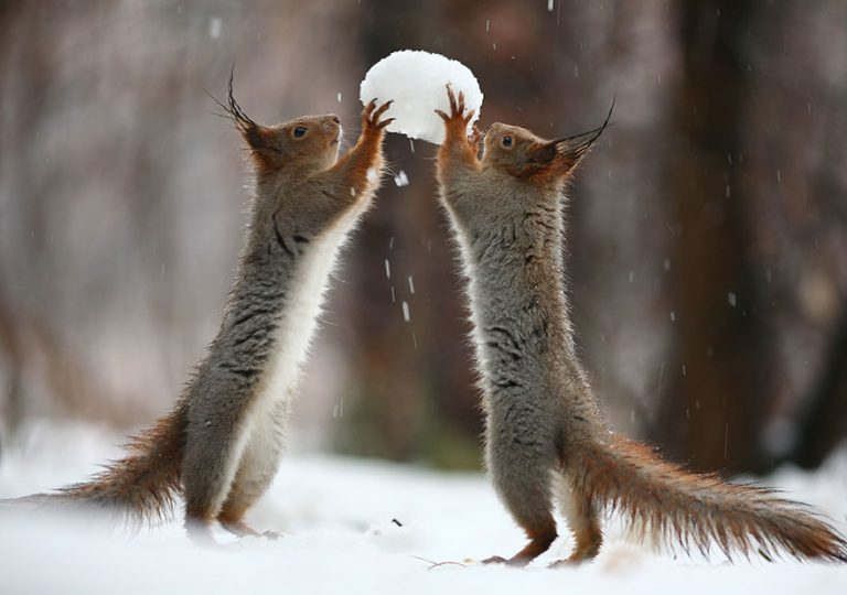 4 - These Pics Of Squirrels Is The Most Adorable Thing You Can See On The Internet.!!