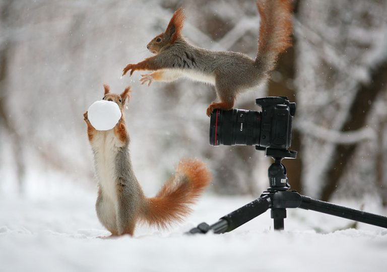 5 - These Pics Of Squirrels Is The Most Adorable Thing You Can See On The Internet.!!