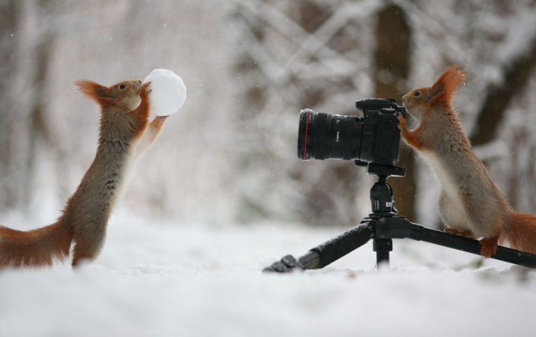 6 - These Pics Of Squirrels Is The Most Adorable Thing You Can See On The Internet.!!