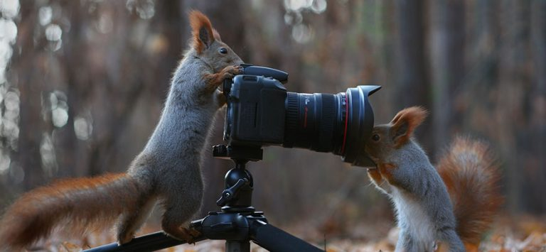 7 - These Pics Of Squirrels Is The Most Adorable Thing You Can See On The Internet.!!