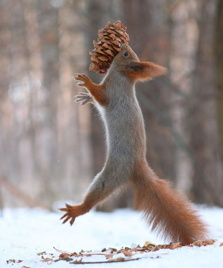 8 - These Pics Of Squirrels Is The Most Adorable Thing You Can See On The Internet.!!