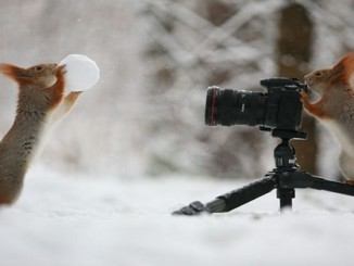 cover - These Pics Of Squirrels Is The Most Adorable Thing You Can See On The Internet.!!